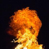 Укротители огня :: Erizo Espinoso