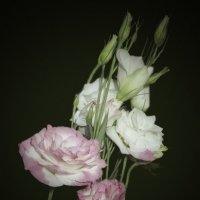 Эустома (альпийская роза) :: Анна Бойнегри