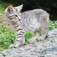 Сочинский кот :: Марина