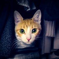 Кот в шкафу :: Катерина L.A.
