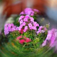 Цветы :: Николай Терентьев