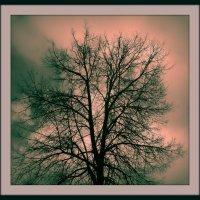 Природа - великий художник :: veilins veilins