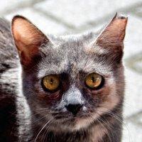 Бобруйское животное :: Ирина Пирогова