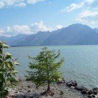 Монтрё.Женевское озеро. :: Сергей Шруба