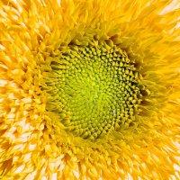 Солнце! :: Алла Захарова