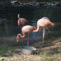 Фламинго :: Екатерина Дорохова