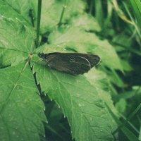 бабочка. :: Христя Мельниченко