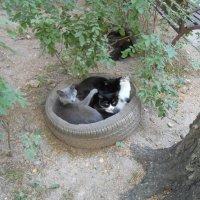 Букетик котиков :: Настасья Мерчуткина-Щукина