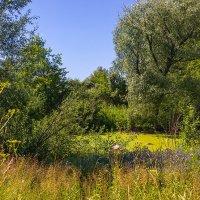 Неподалёку от реки. Пруд. 24 июля 2014г. Nokia Lumia 1020 :: Vadim Piottukh