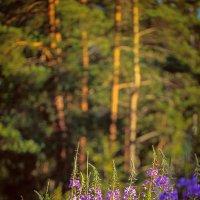 «Последние лучи солнца» :: Елена Ташбулатова (Yougen)