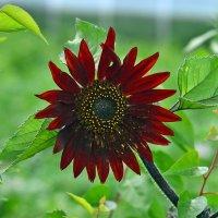 красивый цветок :: виктор Иоакиманский