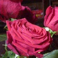 Опять розы :: Татьяна Юрасова