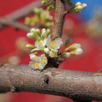 Из мира цветов :: Александр Коликов