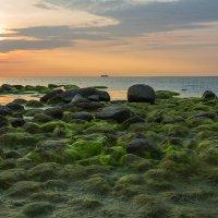 Графская бухта 2. Южный берег Финского залива. :: Юрий