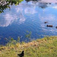 Водные процедуры :: Самохвалова Зинаида