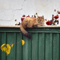 Осень :: Lisa ...