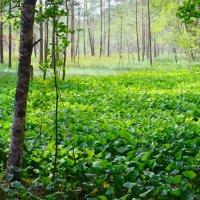 Живописное болото. :: Viacheslav