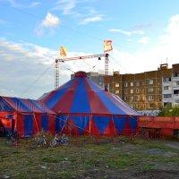 В городе цирк :: Ольга