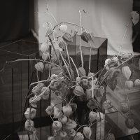 Физалис и вазы. :: Андрий Майковский