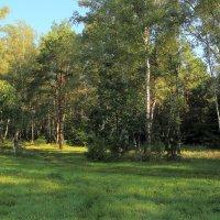 Утро в лесу :: Александр Клочков