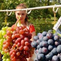 Виноград и виноградарь. :: Владимир Болдырев