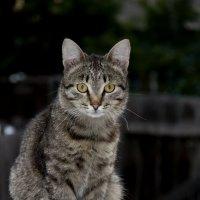 Мой кот Кеша. :: Виктор