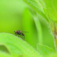 Печальная муха :: .civettina ...