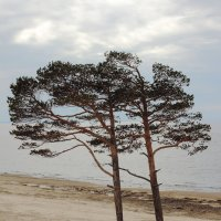 Море :: Ale-X-andr Осауленко