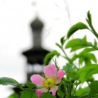 звезда в монастырском саду :: Александр С.