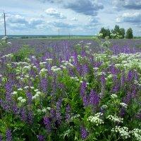 Поле цветов :: Валерий Талашов