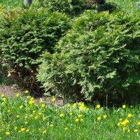 Немного весны. Монастырский сад. :: Геннадий Александрович