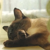 Спит мяука сладко-сладко.... :: Tatiana Markova