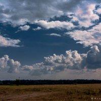 Где то в поле... :: Игорь Вишняков