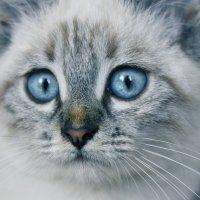 Котя :: Олег Крылов