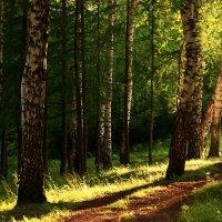Вечер в лесу :: Olenka