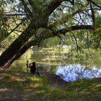 В тени деревьев. :: Oleg4618 Шутченко