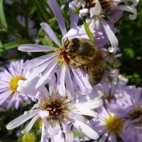 Пчелка :: Наиля