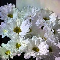 Хризантемы :: Наталия Лыкова
