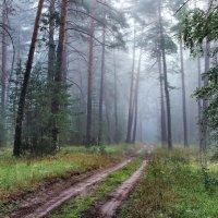 Лесной задумчивою грустью... :: Лесо-Вед (Баранов)