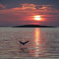 вечер на западном побережье :: liudmila drake