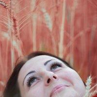 Пшеничное лето :: Елена Семёнова
