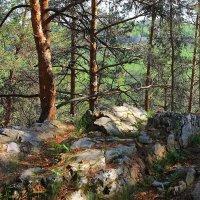 И на камнях растут деревья... :: Галина Стрельченя