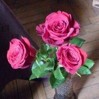 Розовый букет :: Татьяна Юрасова