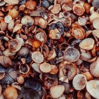 на море - Море ракушек :: Екатерина Overon