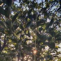 Sunset V.2 HDR :: MIkael Aslanyan