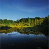 У лесной протоки. :: Евгений