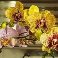 орхидеи :: juriy luskin