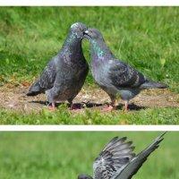 знакомство,любовь,зависть... :: linnud