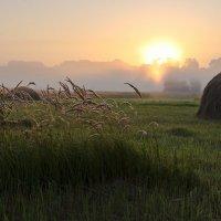 Вышло Солнце из тумана... :: Александр Крупский