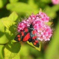 Бабочка :: Aнна Зарубина